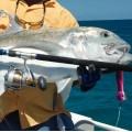 Poping Offshore Makinalar