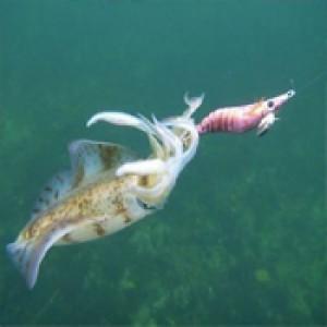 Squid Yem